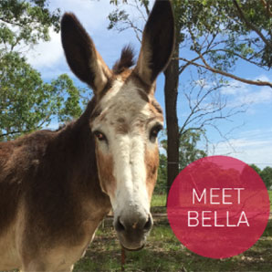 meet-bella