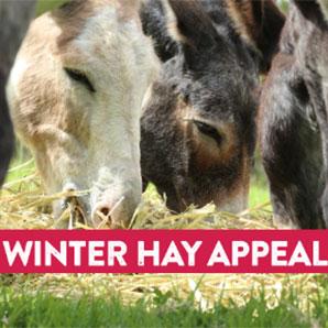 winter-hay