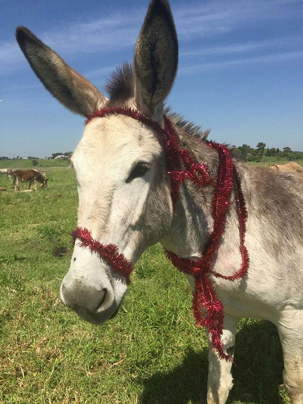 Donkey Welfare With Heart Inc  – Happiness Has Long Ears