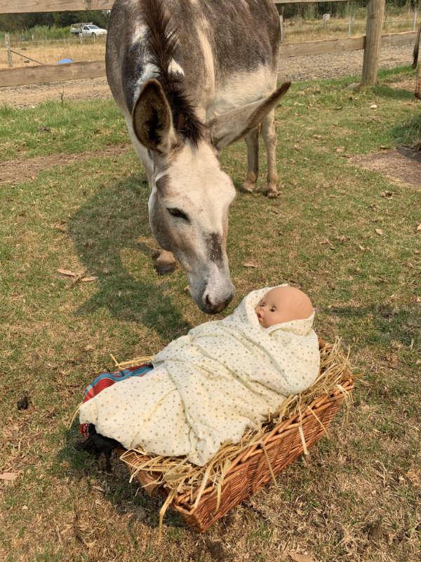 donkey-03